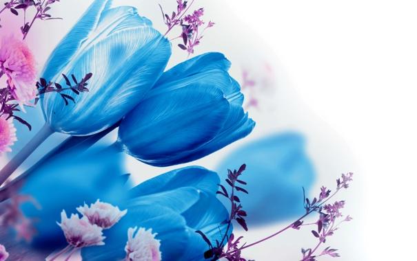 Фото обои макро, весна, лепестки, тюльпаны
