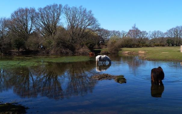 обои : портрет, природа, Лошадь, Трава, Поле, Рыжих, весна, Рапс ... | 380x605