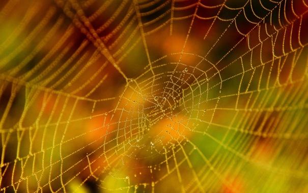 Фото обои краски, ярко, осенью, паутинка, росинки