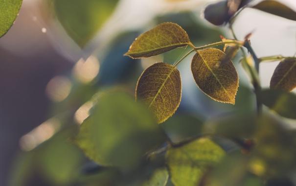 Фото обои листья, макро, ветка, зелёный