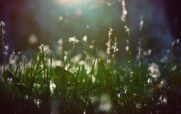 Фото обои трава, свет, пух