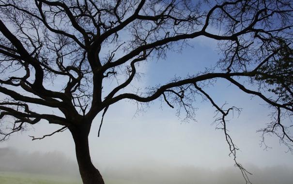 Фото обои силуэт, ветки, небо, природа. дерево