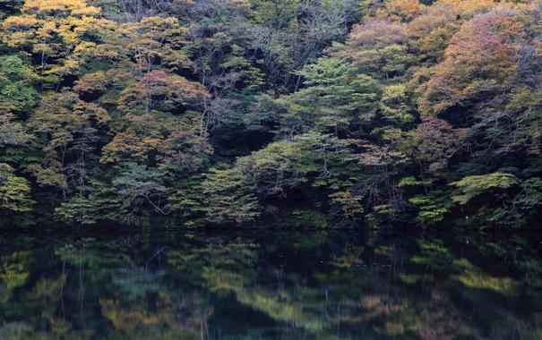 Фото обои лес, деревья, озеро, отражение