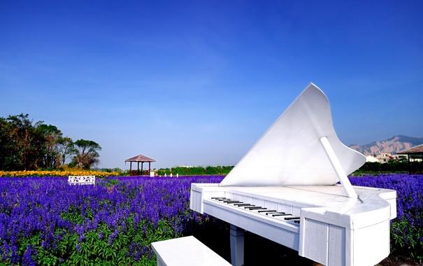 Фото обои поле, белый, небо, цветы, природа, рояль, беседка