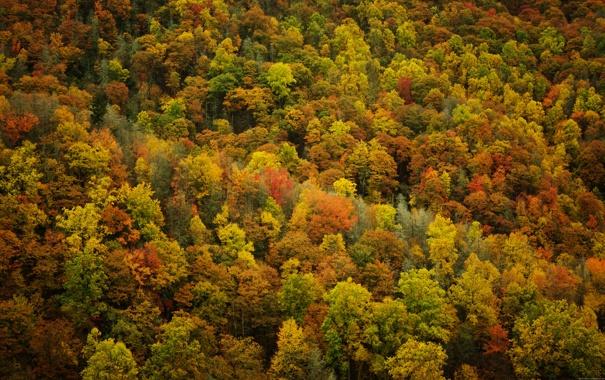 Фото обои осень, листья, деревья, природа, леса, осенние обои