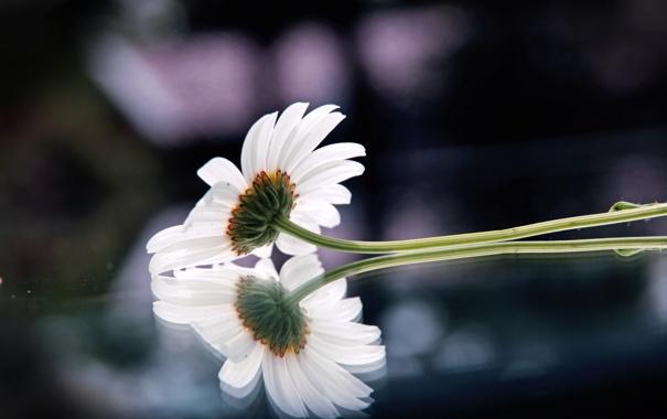 Фото обои цветок, стекло, макро, отражение, фото, фон, обои