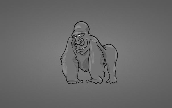 Фото обои темный фон, обезьяна, горилла, monkey, gorilla