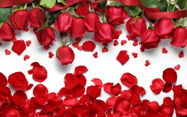 Фото обои розы, лепестки, сердечки, red, love, flowers, hearts