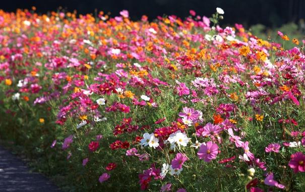 Фото обои поляна, фокус, разноцветные, много