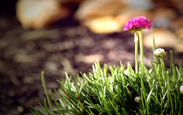 Фото обои цветок, трава, Indian Summer