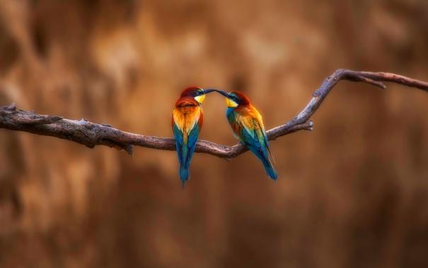 Фото обои птицы, краски, ветка, перья, клюв