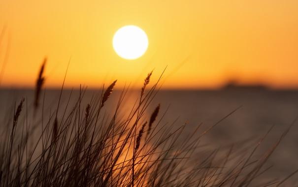 Фото обои трава, пейзаж, закат