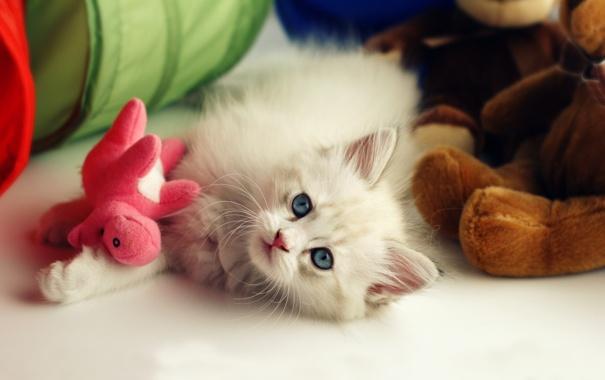 Фото обои котенок, фон, игрушка, пушистый