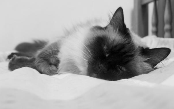 Фото обои взгляд, морда, макро, кровать, черно-белая