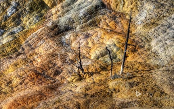 Фото обои деревья, горы, скалы, цвет, Вайоминг, США, Йеллоустонский национальный парк