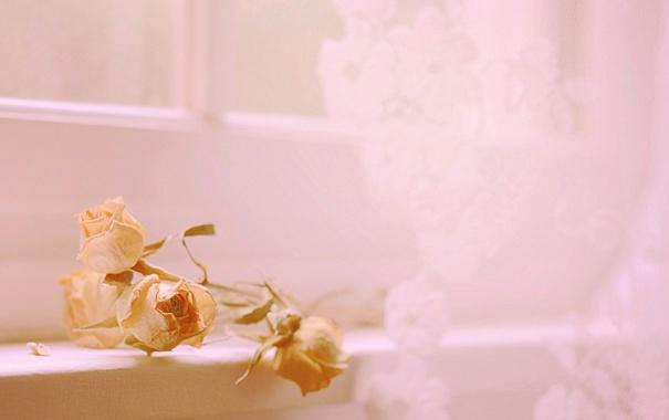 Фото обои цветы, фон, розы