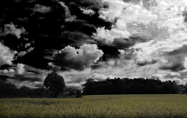 Фото обои лес, поляна, мрачно, облачность