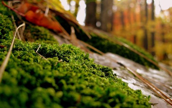 Фото обои осень, лес, трава, камни