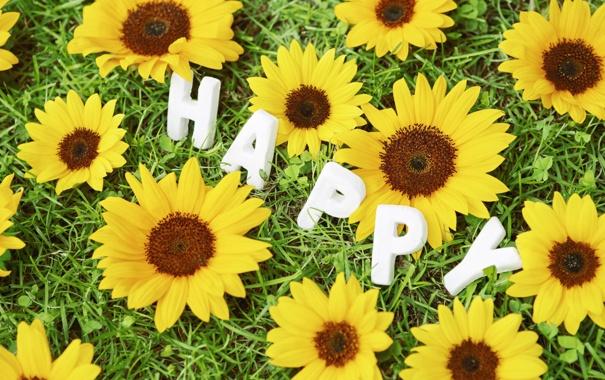 Фото обои трава, цветы, ромашка, happy