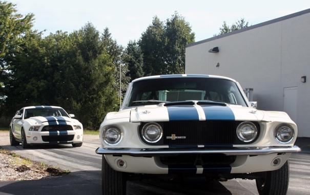 Фото обои деревья, полосы, Mustang, Ford, Shelby, GT500, мустанг