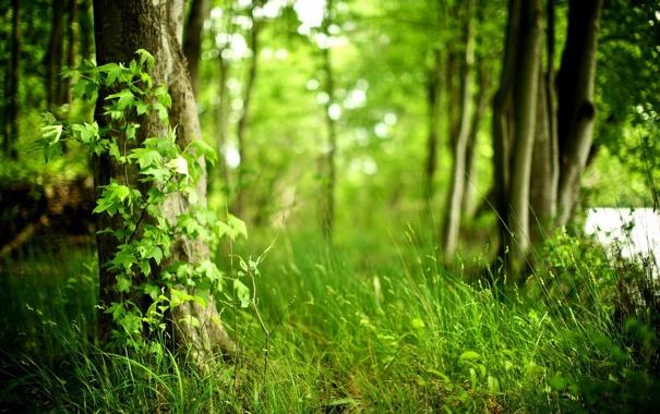 Фото обои зелень, лес, лето, трава, деревья, размытость, вветки