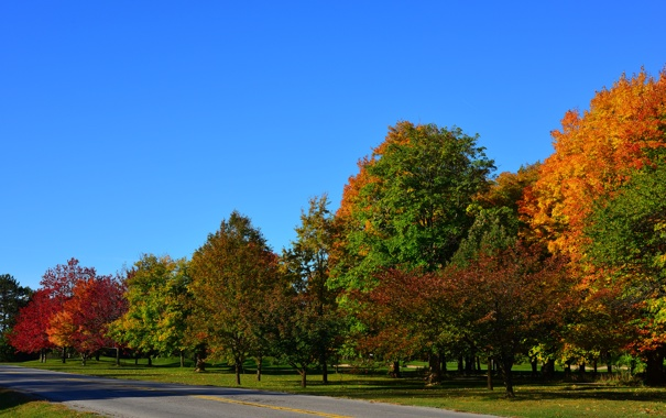 Фото обои дорога, осень, лес, небо, деревья