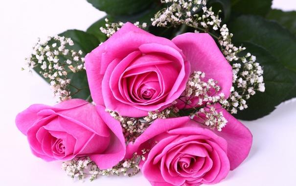 Фото обои розы, букет, розовые, гипсофила