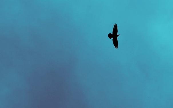 Фото обои небо, природа, фон, птица, минимализм, Ворон