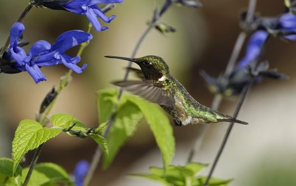 Фото обои цветы, птица, колибри, солнечно, полевые