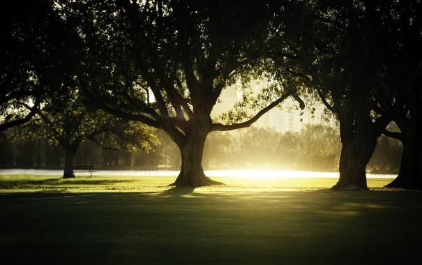 Фото обои свет, деревья, парк
