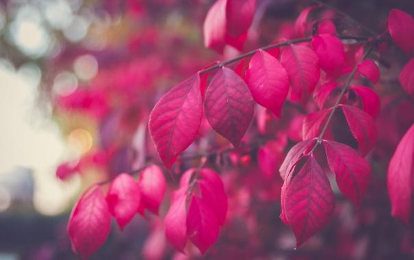 Фото обои листья, дерево, ветка