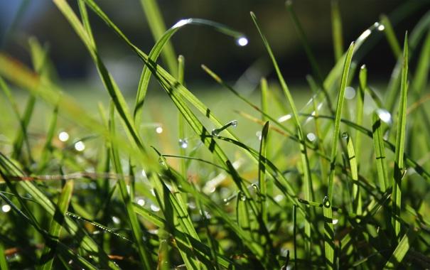 Фото обои поле, трава, капли, grass, macro, dew drops