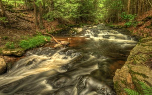 Фото обои лес, вода, деревья, пейзаж, природа, река, hdr