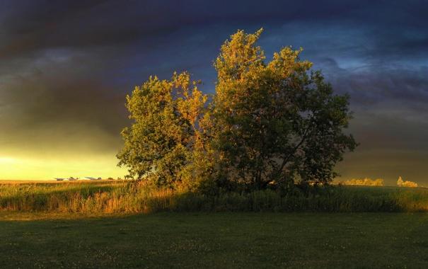Фото обои небо, тучи, дерево, Eye for an eye
