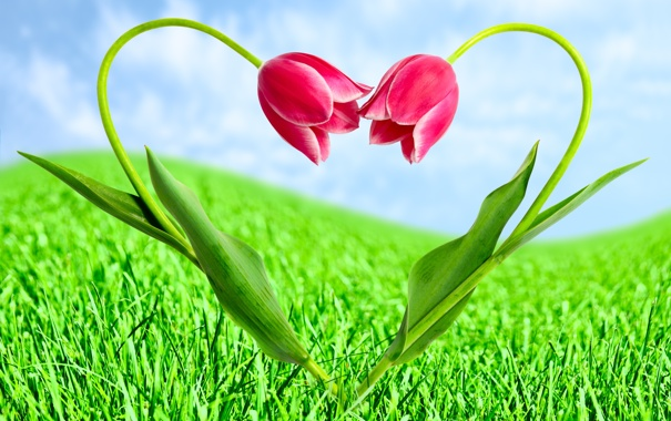Фото обои тюльпаны, трава, облака, цветы