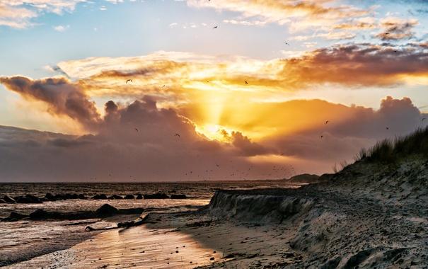 Фото обои море, пляж, небо, солнце, облака, берег, чайки