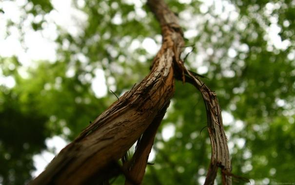 Фото обои листья, дерево, ствол, кора