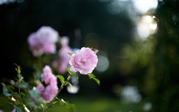 Фото обои листья, цветы, природа, фон, обои, растения, вечер