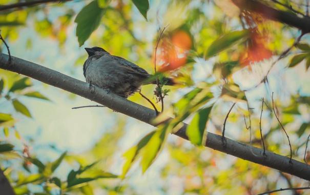 Фото обои листья, солнце, макро, фото, птица, обои, воробей