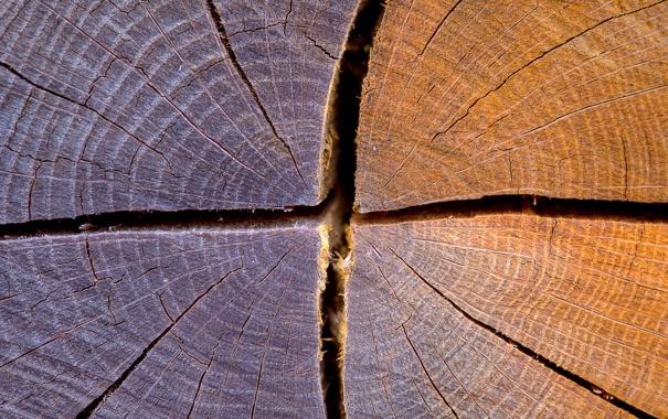 Фото обои текстуры, full hd, трещина, трещины, дерево, брёвна, бревно