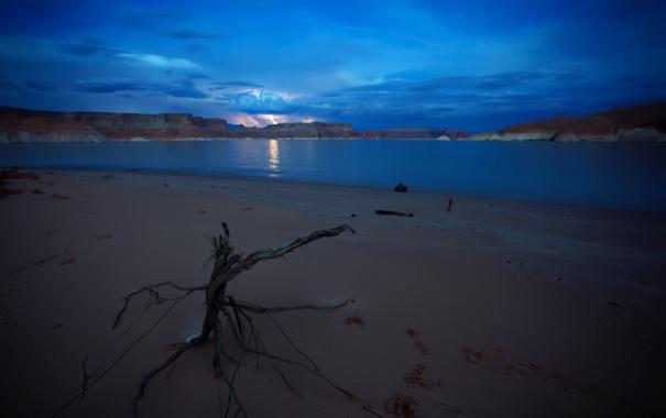 Фото обои пейзаж, ночь, дерево