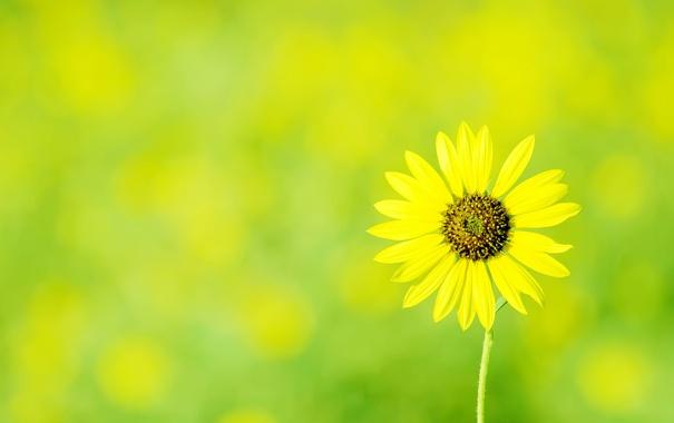 Фото обои цветок, макро, желтый