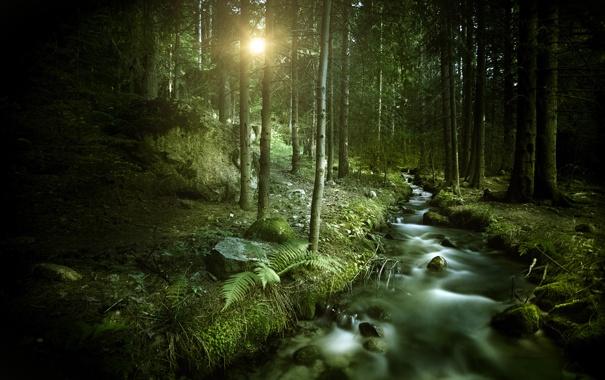Фото обои солнце, ручей, Лес, forest