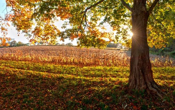 Фото обои осень, листья, солнце, свет, природа, дерево, настроение