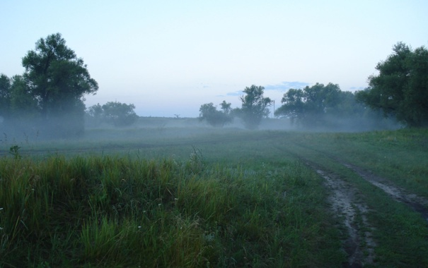 Фото обои дорога, зелень, лес, лето, туман, утро