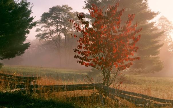Фото обои трава, деревья, природа, туман, фото, обои, забор