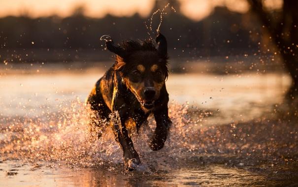 Фото обои взгляд, вода, друг, собака