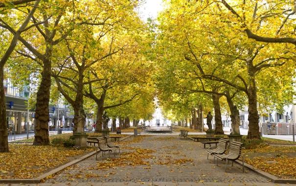 Фото обои деревья, город, скамья