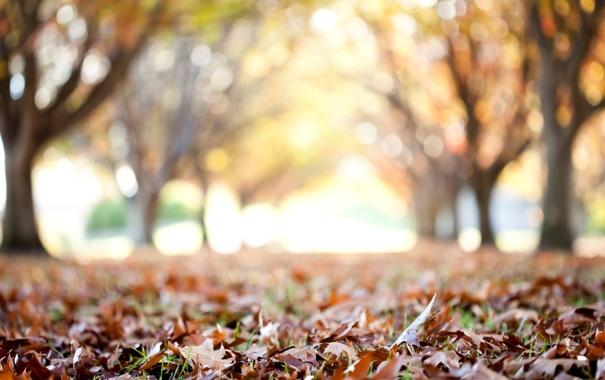 Фото обои осень, листья, макро, деревья, фон, дерево, обои