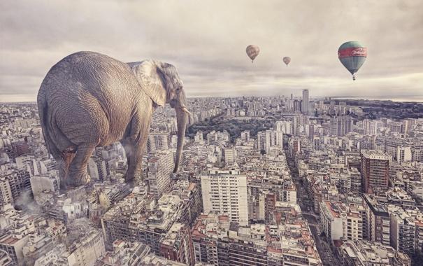Фото обои город, слон, ситуация